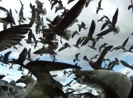 «Leviathan», un film fou signé Véréna Paravel et Lucien Castaing-Taylor – entretien