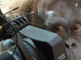 «Animal», le numéro 84 de la revue IMAGES documentaires est en vente