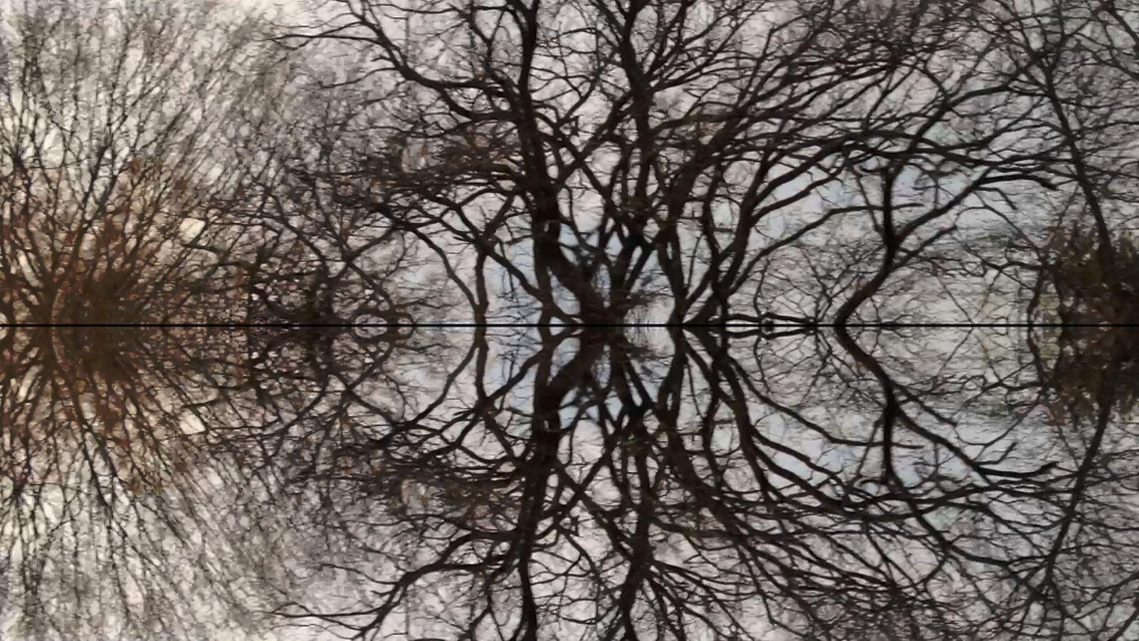 Poétique du cerveau - © Les Films d'Ici